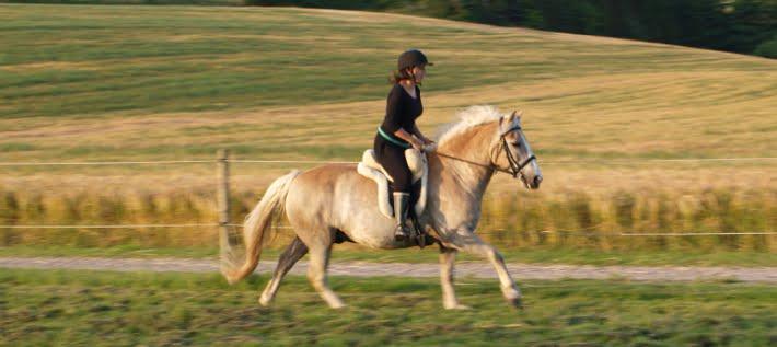 Hest der galoperer rimelig hurtigt på græsbane