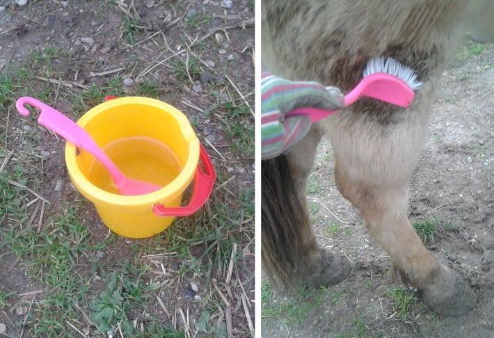 Fjerne mudderkager fra hestens vinterpels med en lille spand og en opvaskebørste