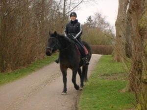 hest der rides med hackamore
