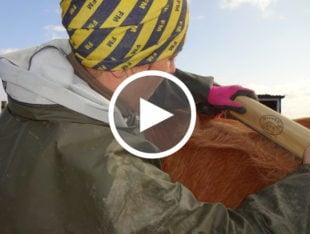 Gitte fjerner vinterpels på hest med Sleekez strigle
