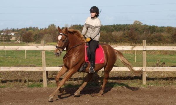 Hest der galoperer på bane med rytter