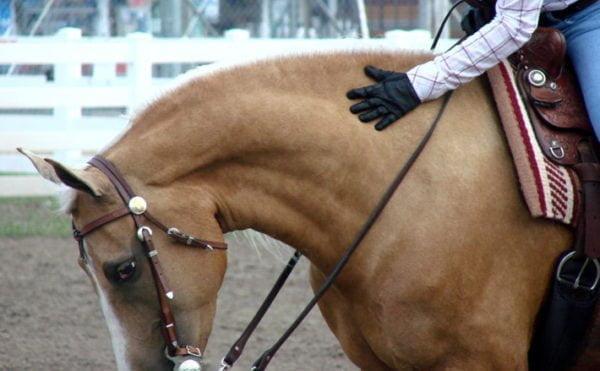 Rytter der klapper sin hest