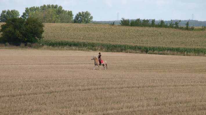 Hest der rides alene på mark