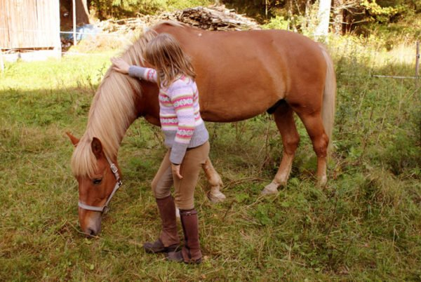 Pige der klapper en hest.