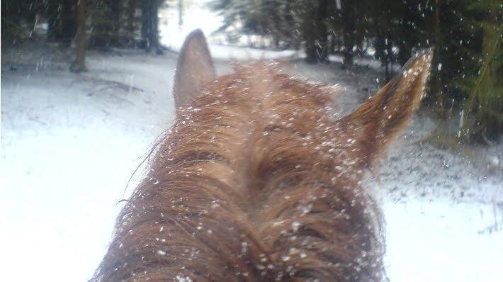 Hest i sne set fra ryggen