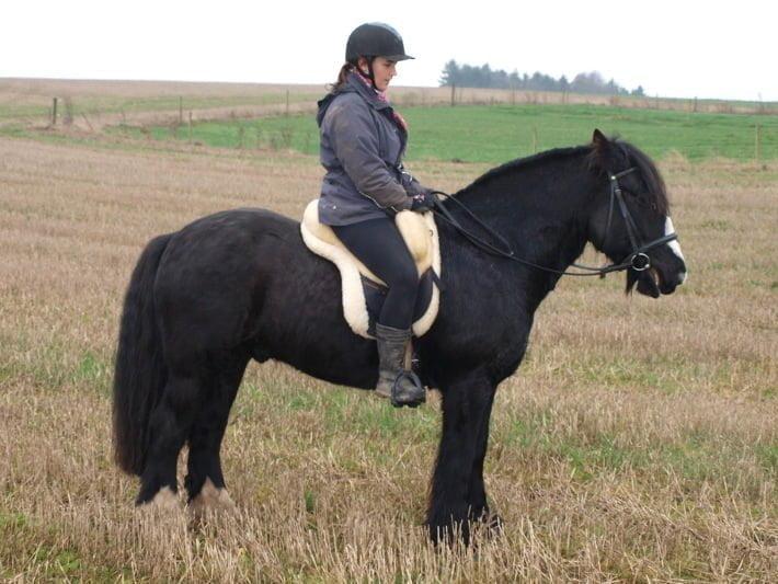 Hest med lammeskindssadel