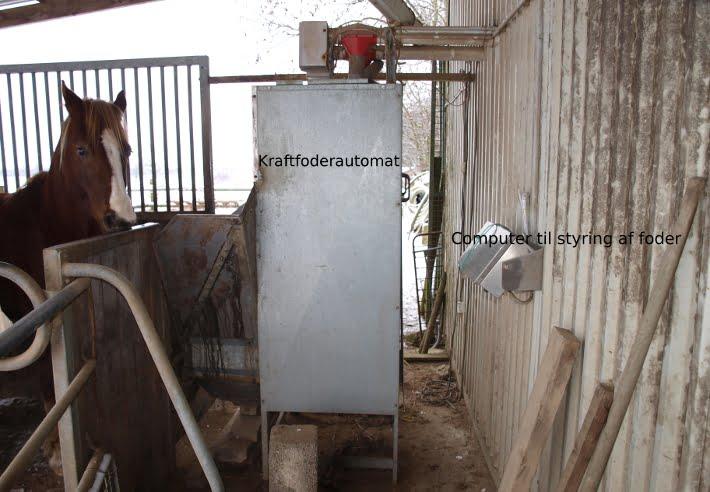hest i fraftfoderstation