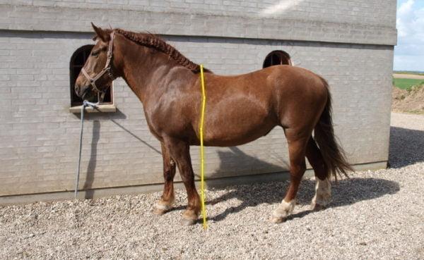 Hest og stangmål