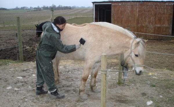Hest der er ved at få fjernet vinterpels med et afstryningsjern