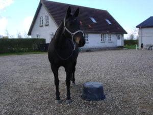 Hest der står ved siden af en murerbalje i forhåbningen om at få godbidder