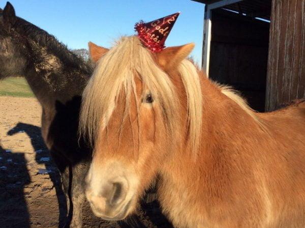 Hest med nytårshat på