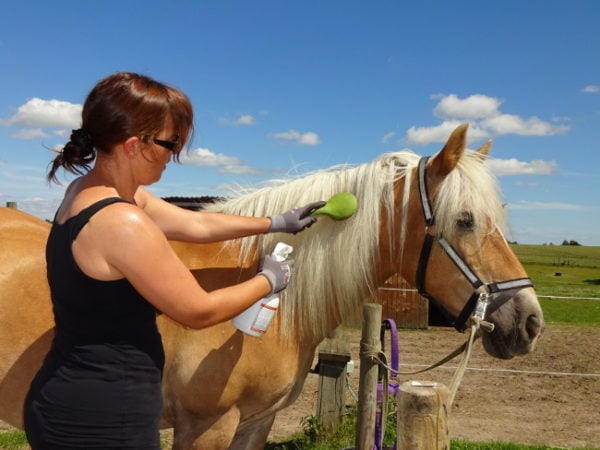 Hest med lang man bliver redt