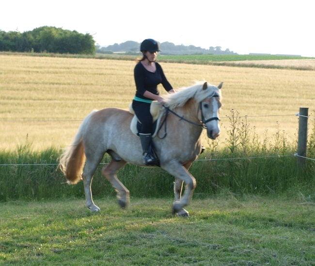 Frisk men afslappet hest i trav