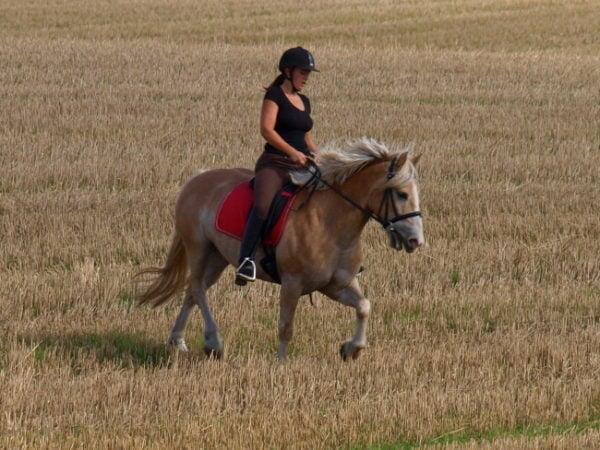 Frisk hest der er lidt anspændt og rides med korte tøjler