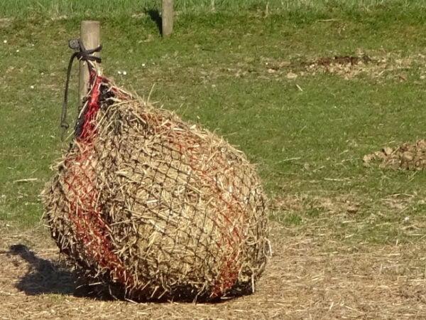 Halm som supplement til grovfoder i småmaske hønet