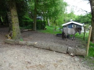 Vandingsted i Paddock Paradise, hvor hestene er nødt til at passere en forhindring af små træstammer for at komme til vandet.