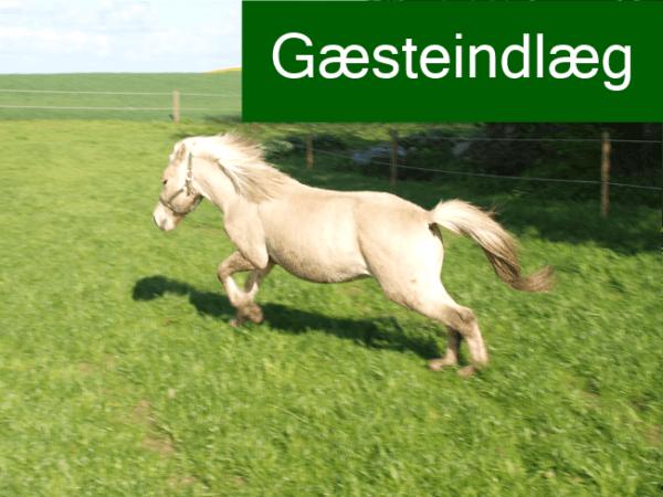 Hest der løber glad på folden