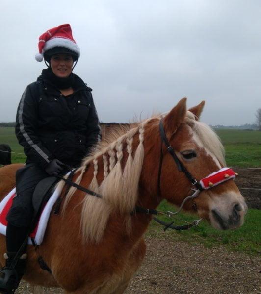 Hest med mekanisk hackamore og julekostume