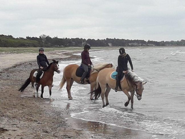 Tre heste på stranden