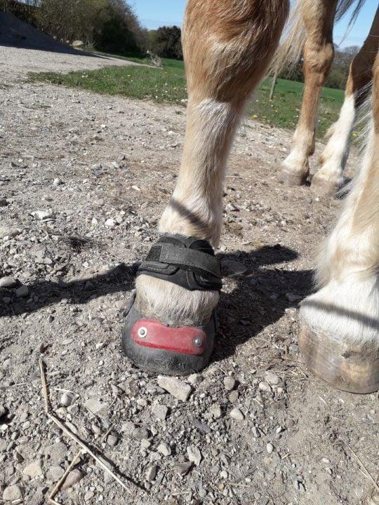 Easyboot Glove set forfra på en hestehvo