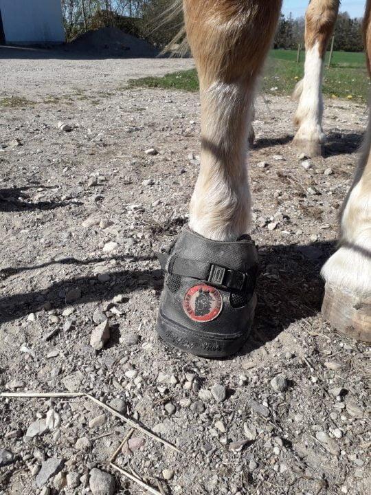 Equine Fusion All Terrain Ultra boots til heste set forfra på hov