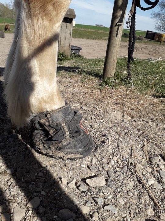 Equine Fusion All Terrain Ultra boots til heste set fra siden med spænde på hov