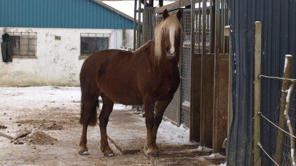 hest foran høstation